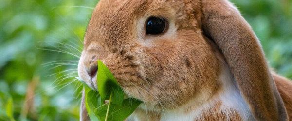 Neues vom Garten- und Kleintierhalterverein Oberrossweide e.V