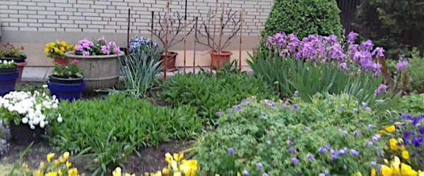 Bienen-, insekten- und vogelfreundliche Vorgärten und Gärten